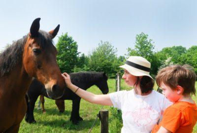 Kayah de paardenkamp soest