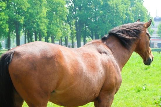 de paardenkamp soest